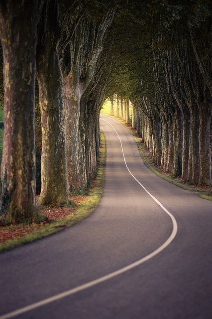 winding road through trees